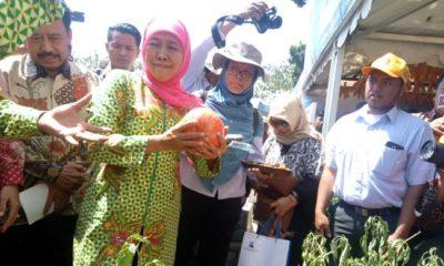 Gubernur Jatim Hj.Khofifah Indar Parawansa saat mengunjungi stan pertanian agro. (Foto : aji saka)